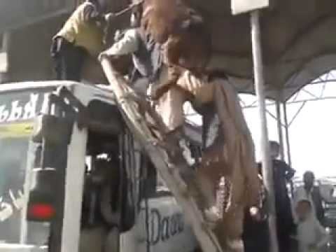 Only in Pakistan Donkey on the bus roof