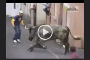Don't mess with an angry bull