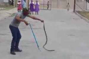 Chawa the snake catcher in Harare