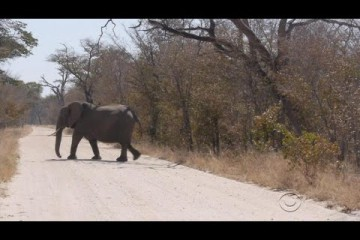 Despite outrage, wildlife hunting could be necessity in Zimbabwe