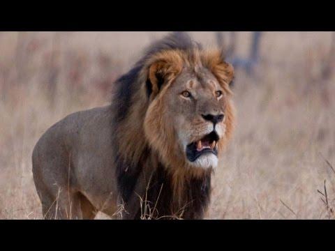 Inside Zimbabwe's business of big-game hunting