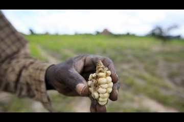 Zimbabwe secures $200m to import maize