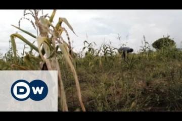 Zimbabwe's farmers struggle after drought
